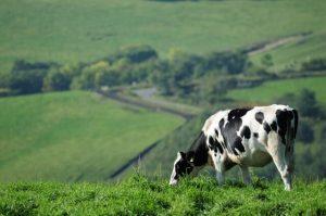 安全で健康に良い牛乳の選び方